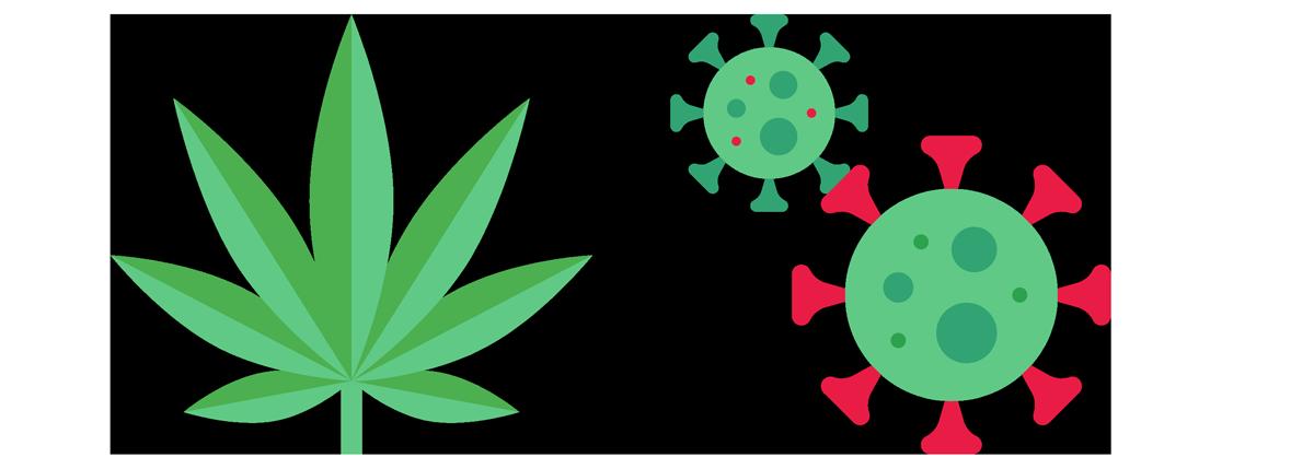 Cannabis leaf and Covid Virus